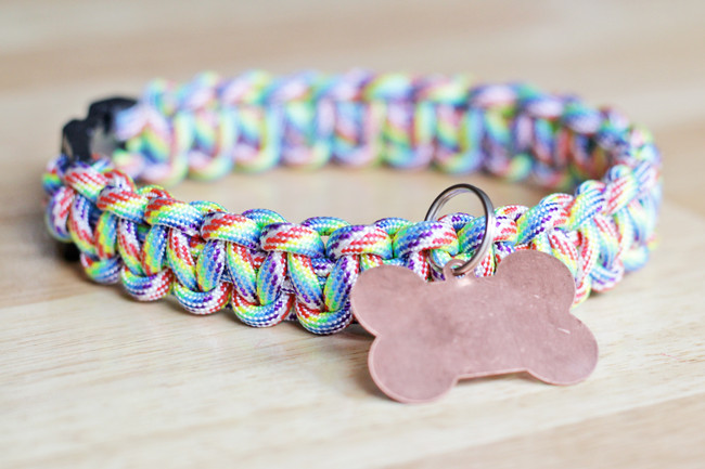 DIY Dog Collar  10 Easy DIY Dog Collars To Jazz Up Your Pup s Summer