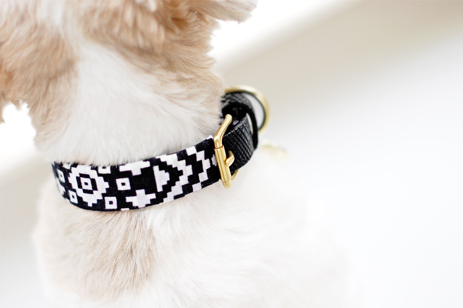 DIY Dog Collar  Pretty Fluffy