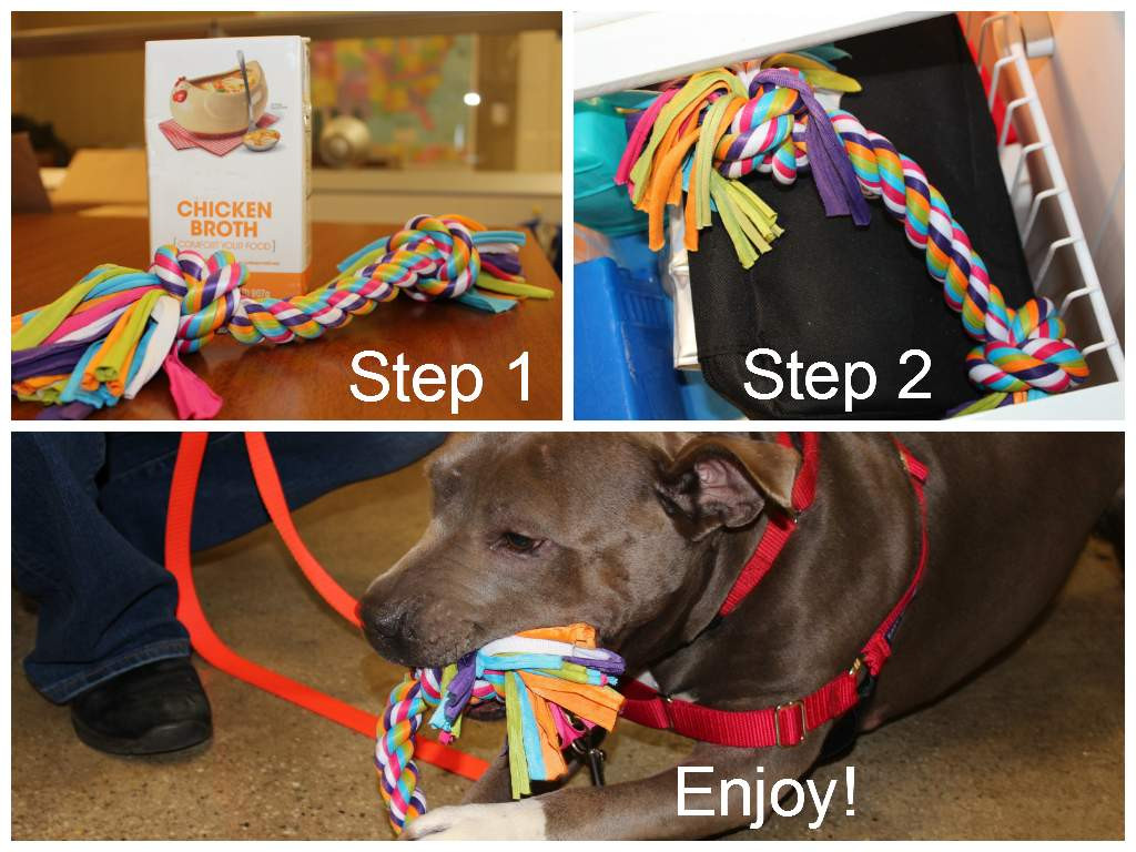 DIY Dog Gifts  Cruelty Free Gift Ideas For Your Pets From the ASPCA