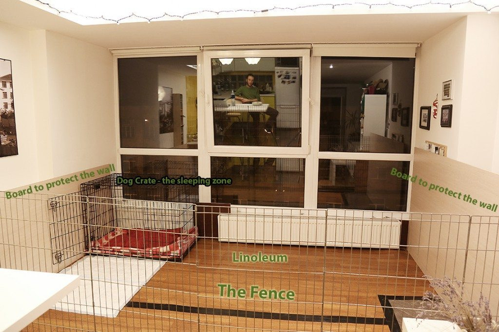 Best ideas about DIY Dog Kennel Indoor . Save or Pin How To Build A Dog Kennel Pen Indoors At Home German Now.