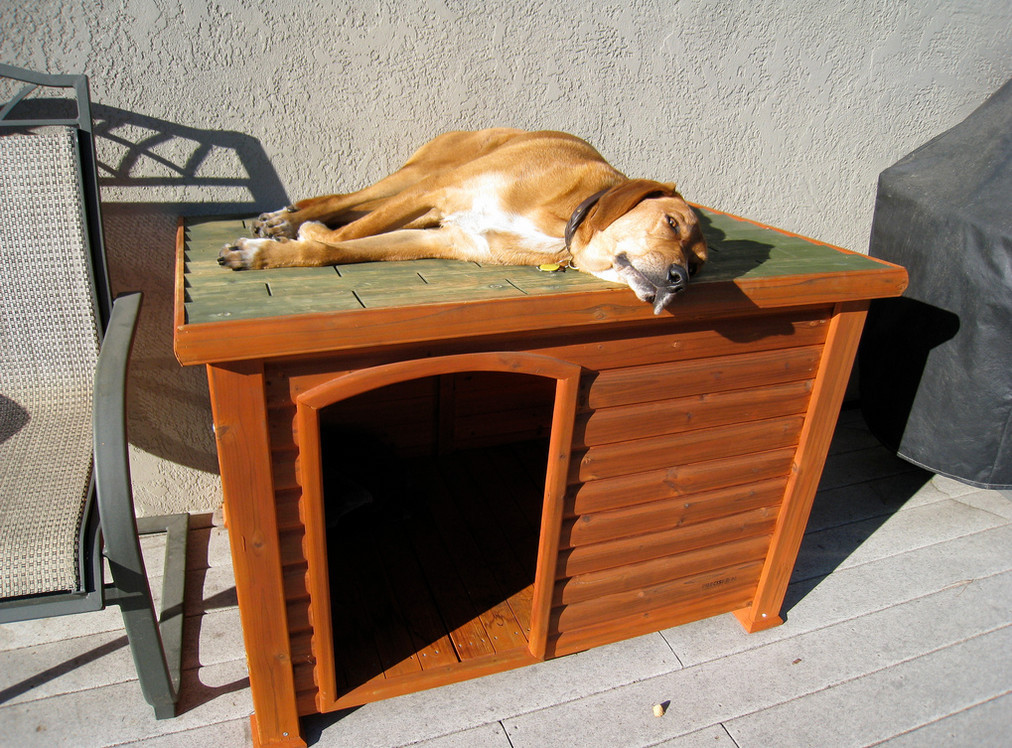 Best ideas about DIY Dog Kennel Indoor . Save or Pin DIY Indoor Dog Kennel Now.