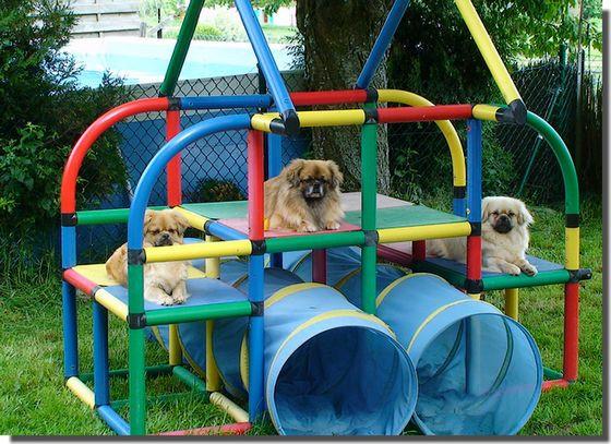 DIY Dog Playground  Backyard dog playground 6