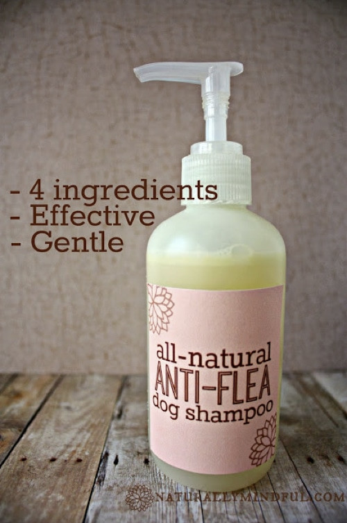DIY Dog Shampoo  Homemade Flea Powder For Dogs