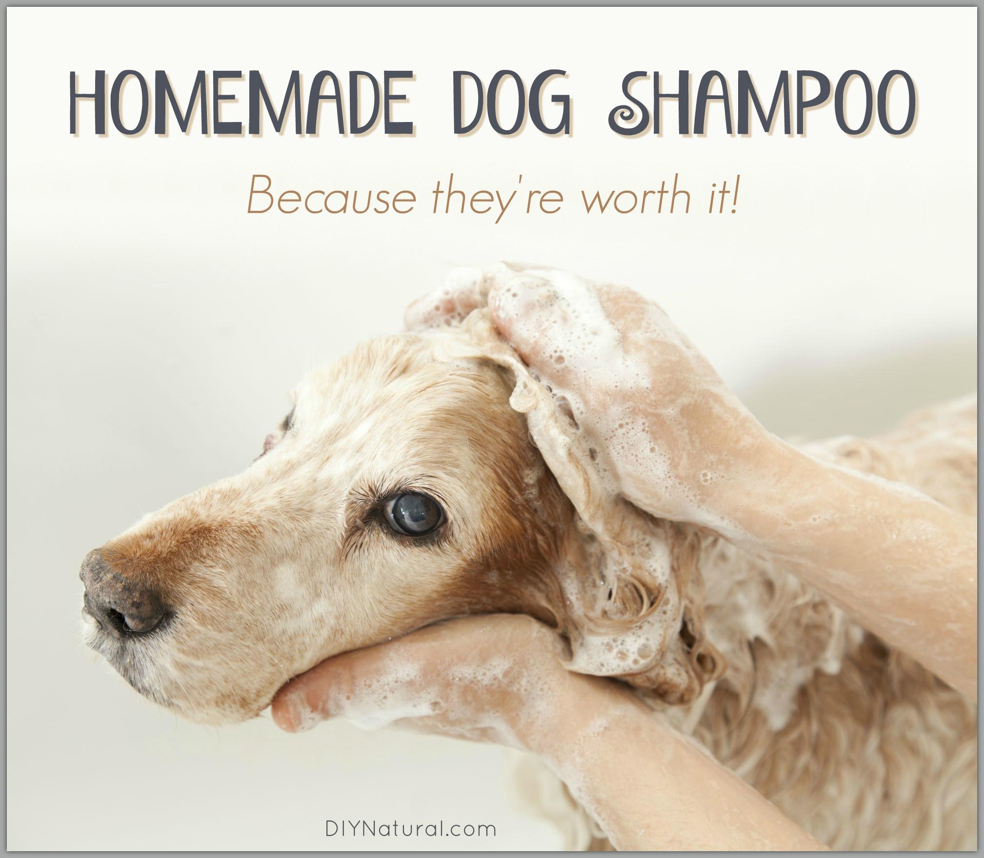DIY Dog Shampoo  Homemade Dog Shampoo Bar A Simple and Natural Recipe