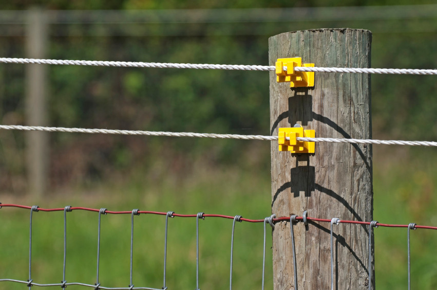 DIY Electric Dog Fence  Electric Fencing for Horses Cattle and Other Livestock