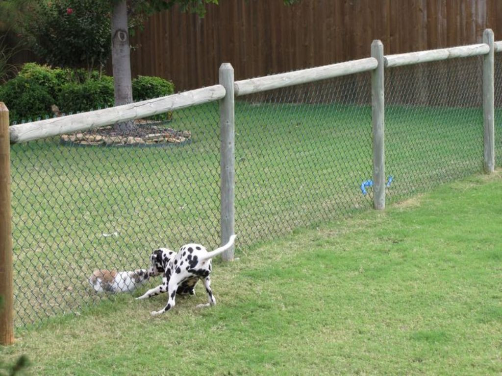 DIY Electric Dog Fence  Ground Electric Pet Fence Kit • Fences Ideas