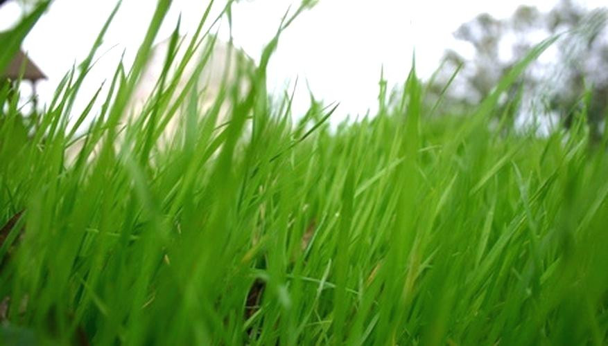 DIY Hydroseed Kit  Diy Hydroseed Lawns Can Be Established With Sod And By