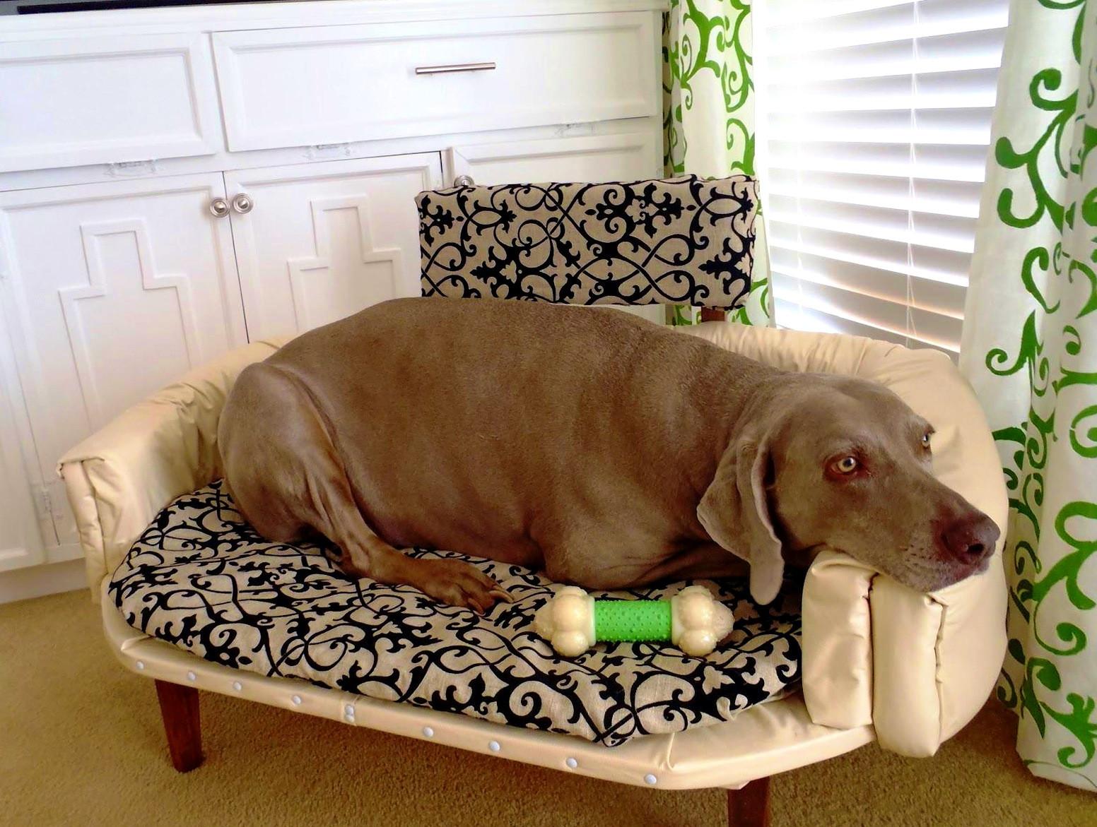 DIY Indestructible Dog Crate  Bedroom Delightful Diy Indestructible Dog Bed Home Design