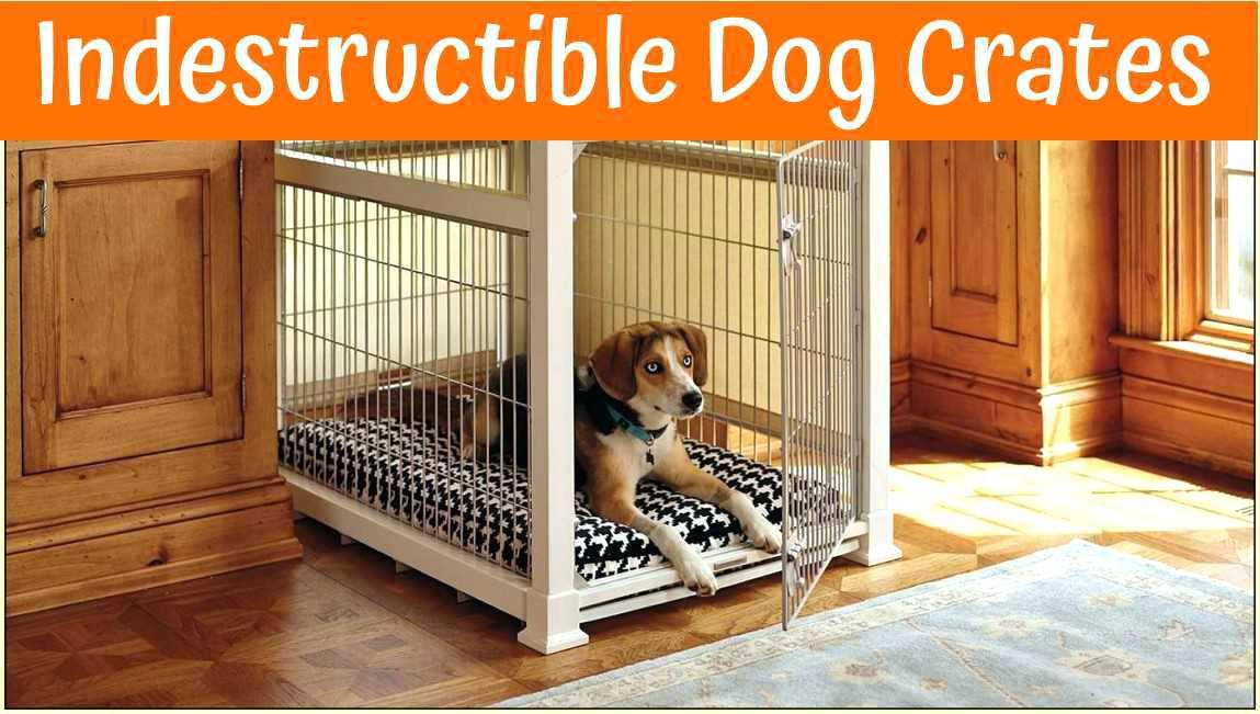 DIY Indestructible Dog Crate  Indestructible Dog Bedding Shepherd Lying Ember West