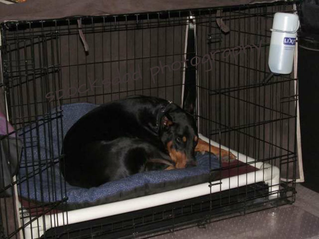 DIY Indestructible Dog Crate  Best Dog Crate Pads Reviews Install High Quality Dog