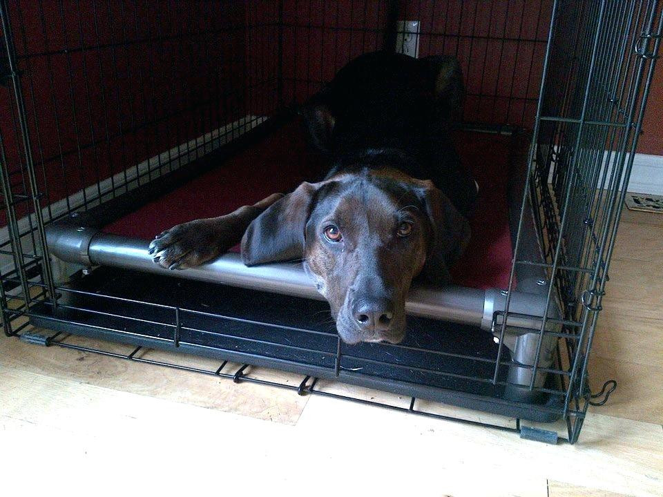 DIY Indestructible Dog Crate  Indestructible Dog Bed Diy Indestructible Dog Bed Best