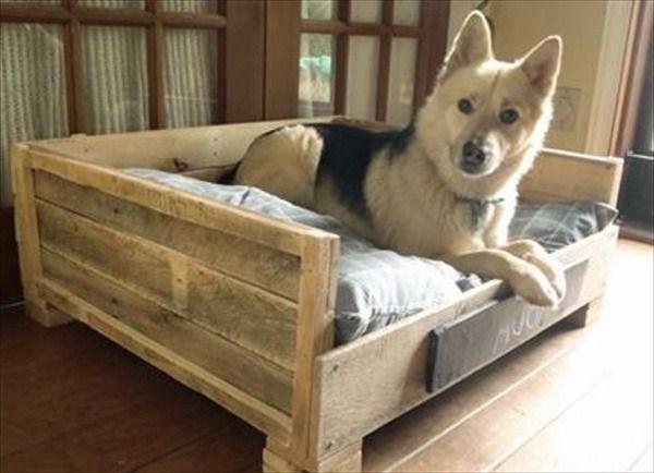 DIY Large Dog Beds  17 Best images about cele mai dragalase animale on