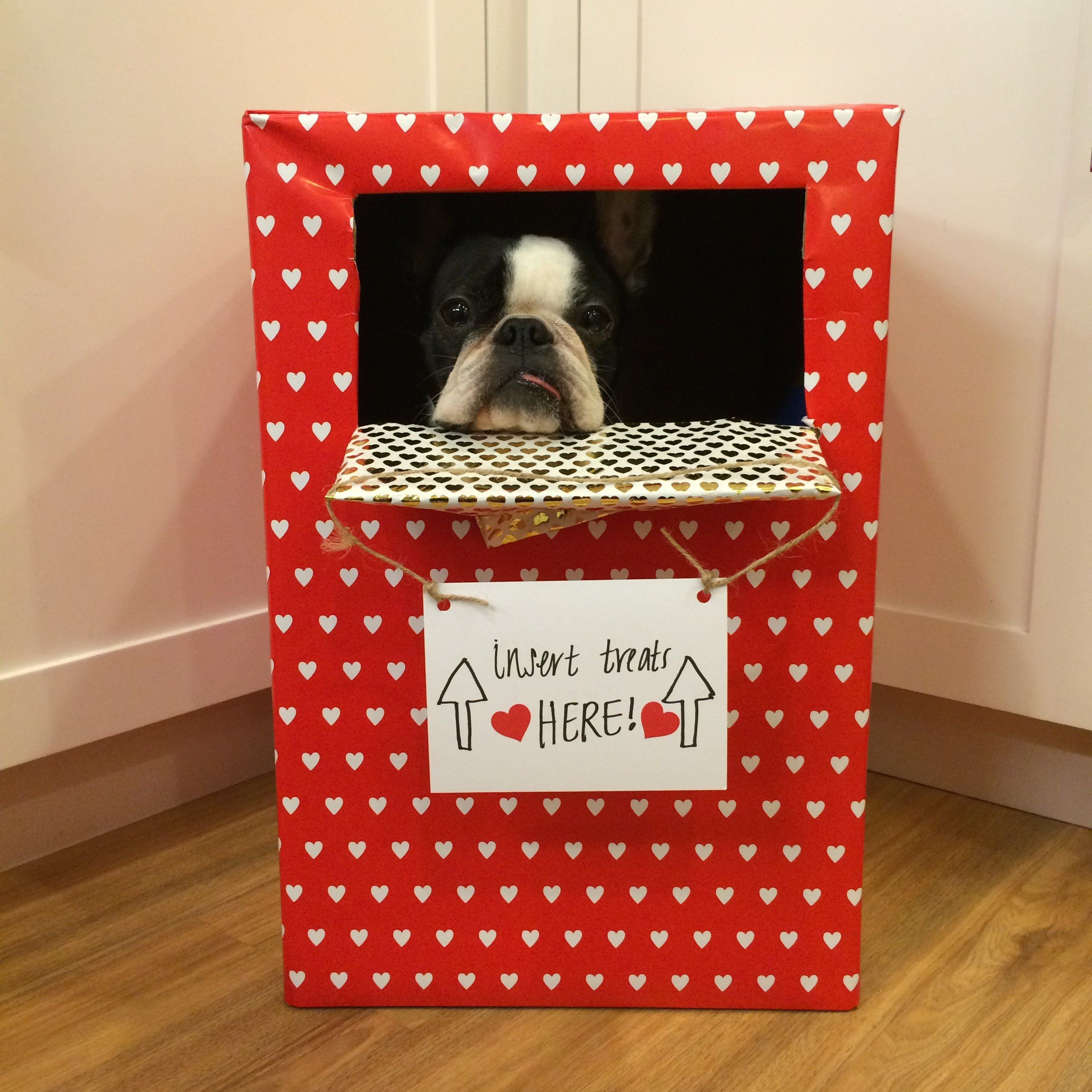 Best ideas about DIY Valentine Box . Save or Pin We Tried 9 DIY Valentine s Crafts with Our Dogs—Here s Now.