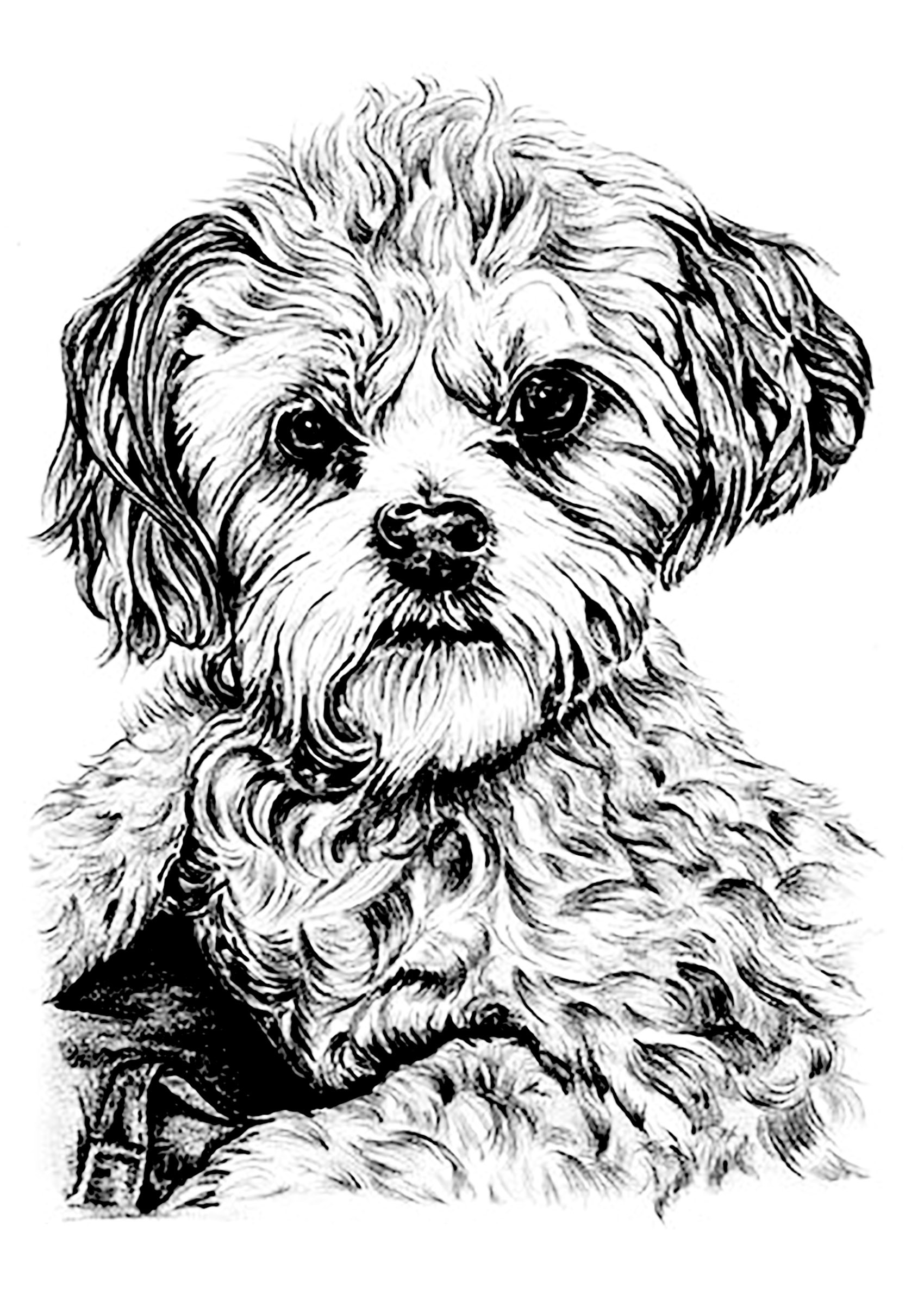 Best ideas about Dogs Coloring Pages For Adults . Save or Pin Dog Dogs Adult Coloring Pages Now.