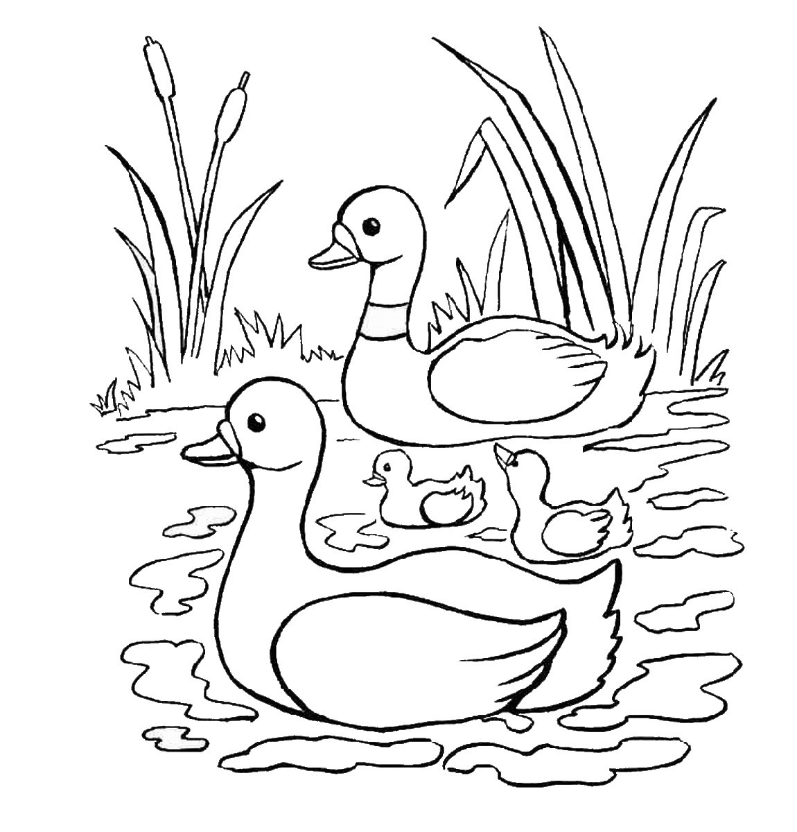 Ducks Coloring Pages  Duck Coloring Pages