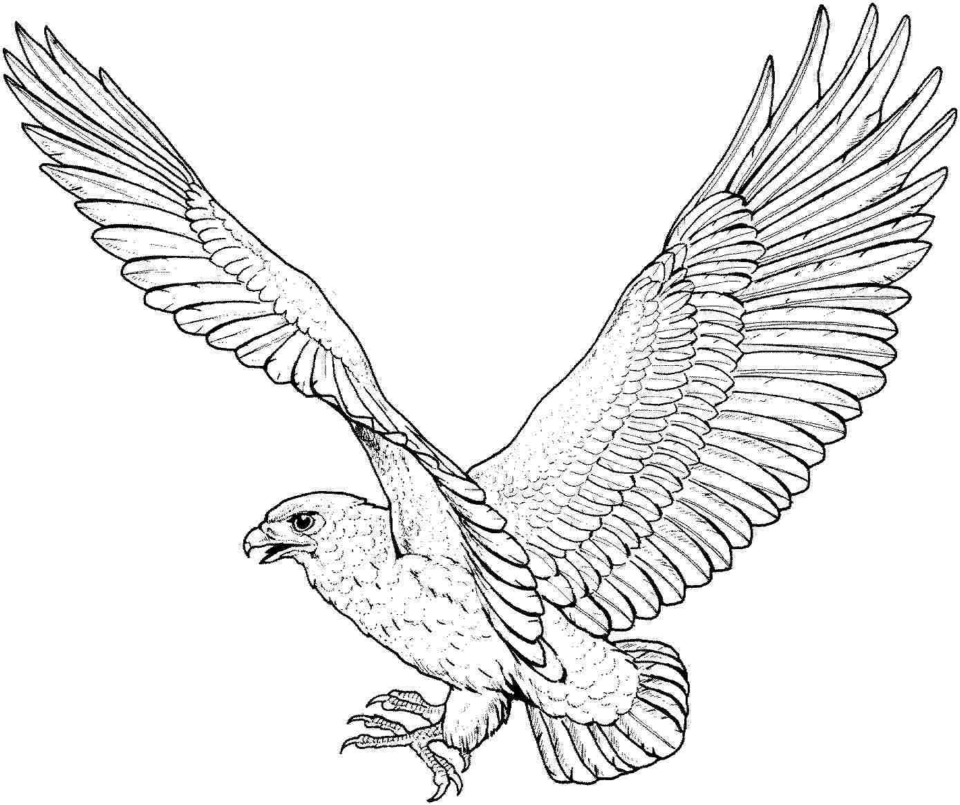 Eagle Coloring Pages  Free Printable Eagle Coloring Pages For Kids