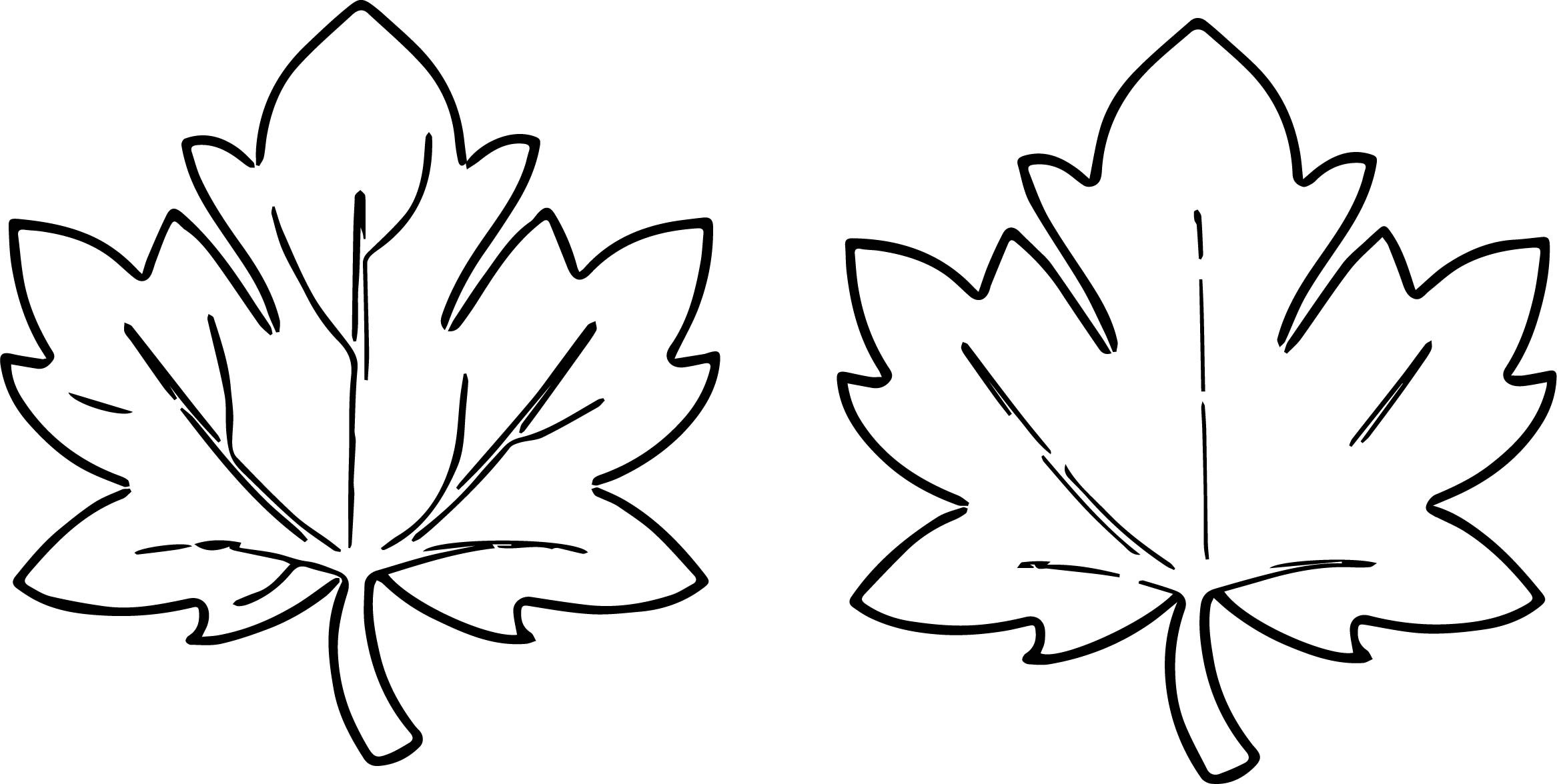 Fall Leaves Coloring Sheet  Fall Leaves For Fall Leaf Coloring Page