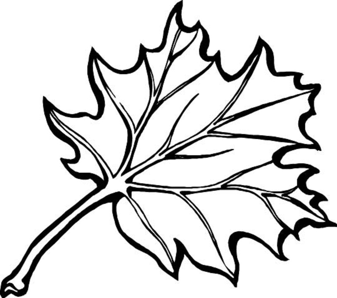 Fall Leaves Coloring Sheet  autumn season coloring pages