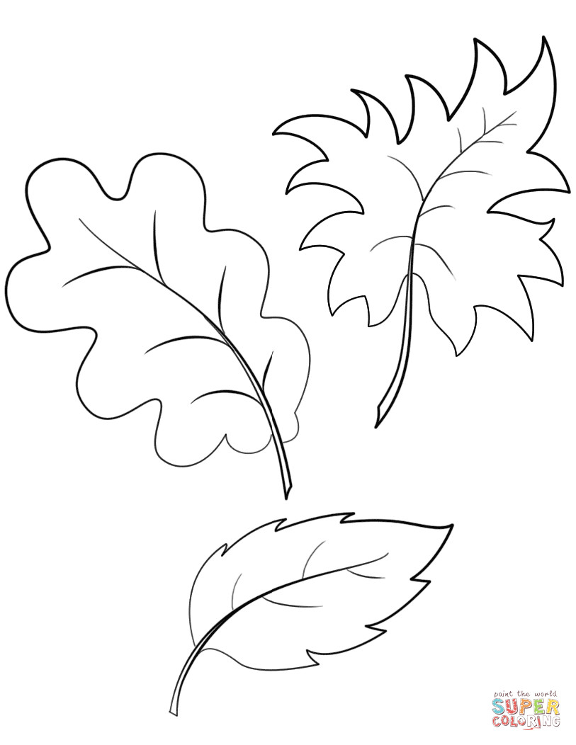 Fall Leaves Coloring Sheet  Fall Autumn Leaves coloring page