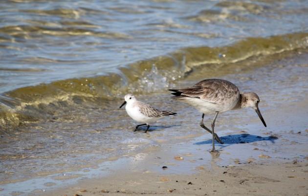 Best ideas about Florida Backyard Birds . Save or Pin 10 000 Birds My Great Backyard Bird Count on the Florida Now.