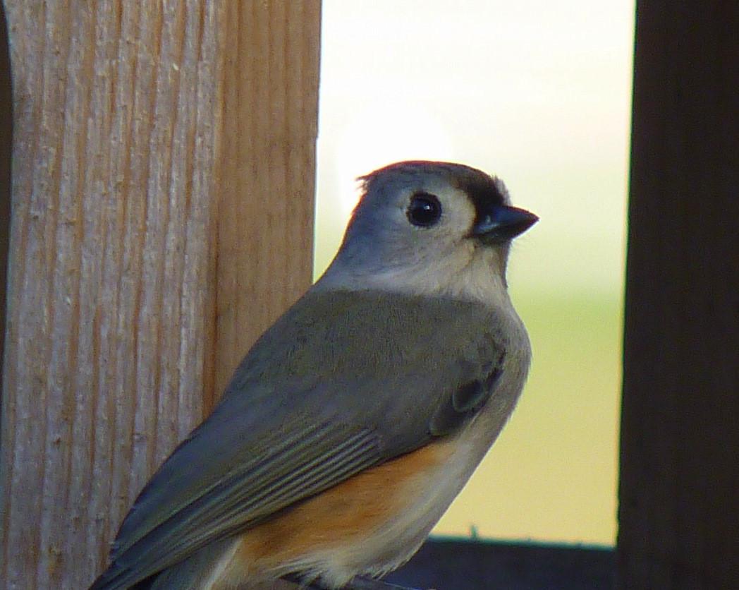 Best ideas about Florida Backyard Birds . Save or Pin My Florida Backyard December 2011 Now.