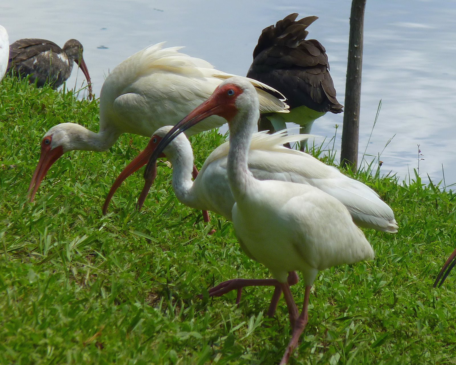 Best ideas about Florida Backyard Birds . Save or Pin My Florida Backyard July 2010 Now.