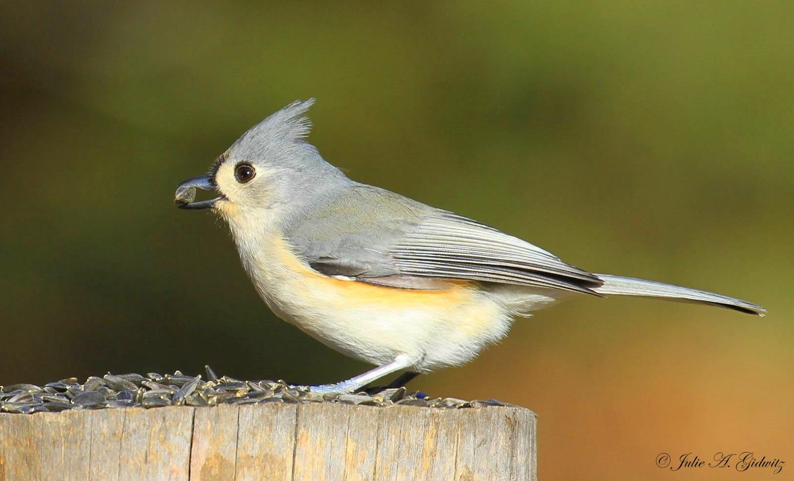 Best ideas about Florida Backyard Birds . Save or Pin Nature s Splendor Backyard Birds Now.