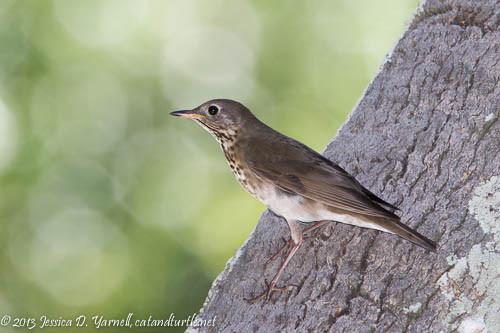 Best ideas about Florida Backyard Birds . Save or Pin Central Florida Backyard Bird Identification Now.