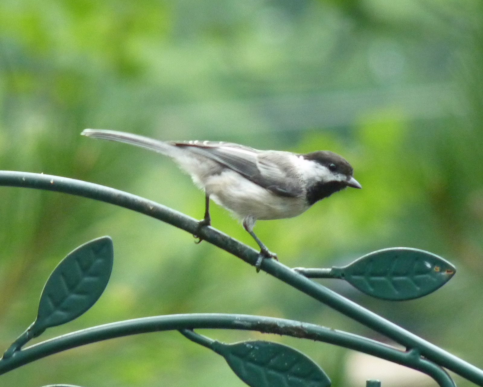 Best ideas about Florida Backyard Birds . Save or Pin My Florida Backyard Life in a Northern Town Now.