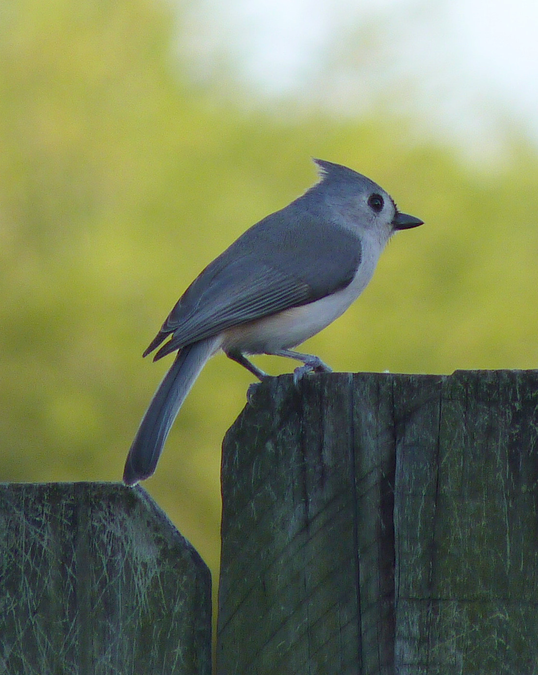 Best ideas about Florida Backyard Birds . Save or Pin My Florida Backyard Now.