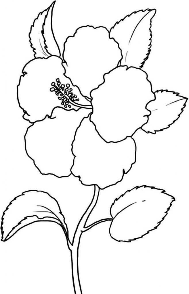 Free Carnation Printable Coloring Sheets  Free Printable Hibiscus Coloring Pages For Kids