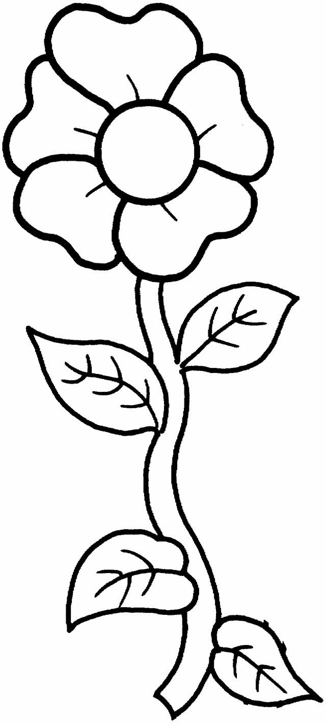 Free Carnation Printable Coloring Sheets  Printable photos of flowers