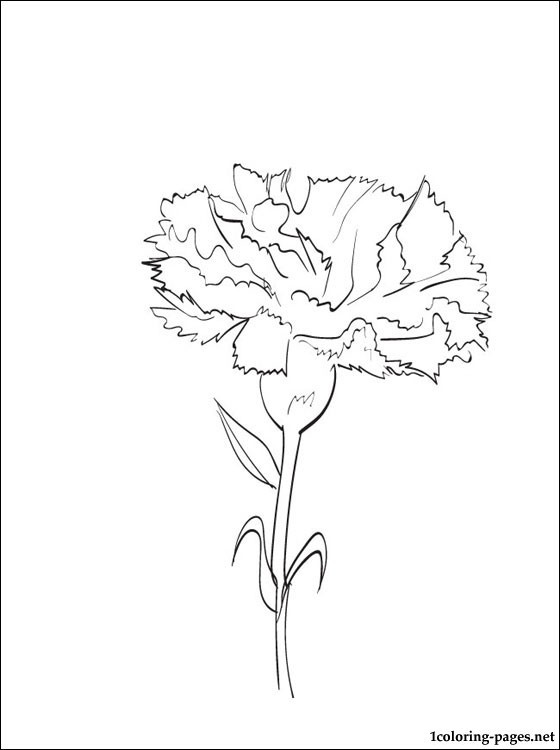 Free Carnation Printable Coloring Sheets  Coloring page Carnation