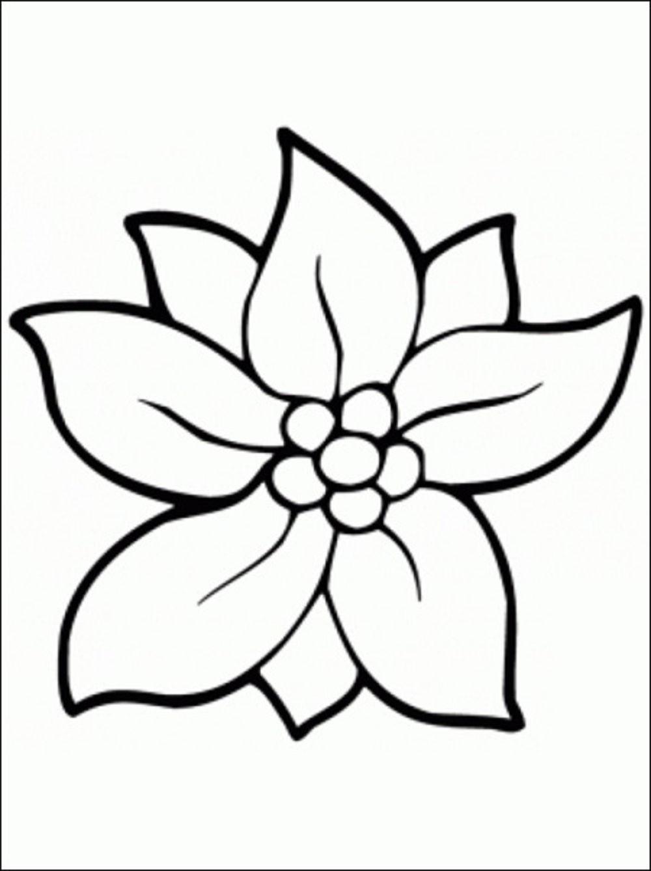 Free Carnation Printable Coloring Sheets  Printable Flower Coloring Pages Printable 360 Degree