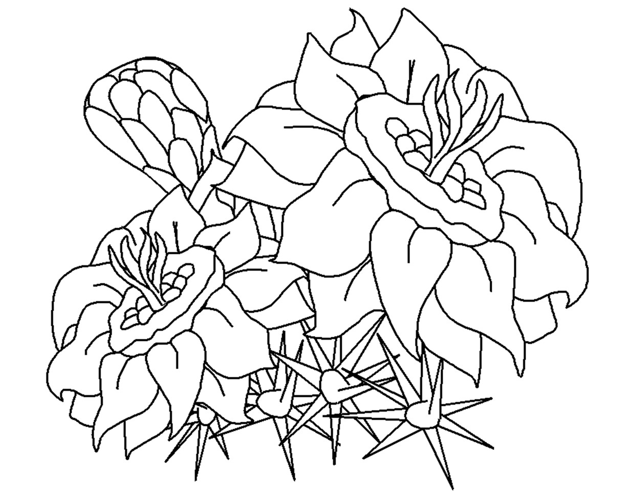 Free Carnation Printable Coloring Sheets  Free Printable Flower Coloring Pages For Kids Best