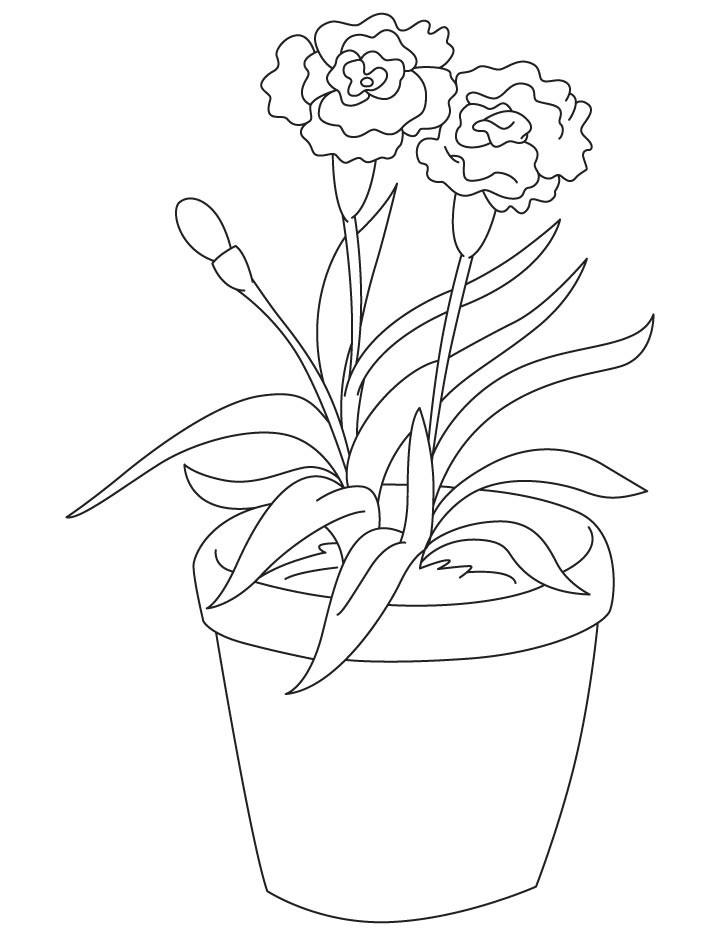 Free Carnation Printable Coloring Sheets  Light red carnation coloring page