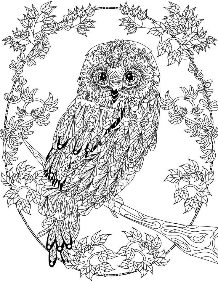 Free Coloring Pages For Adults  OWL Coloring Pages for Adults Free Detailed Owl Coloring