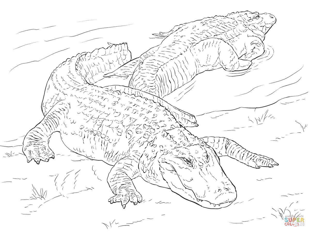 Free Coloring Pages Of Alligators  Two American Alligators coloring page