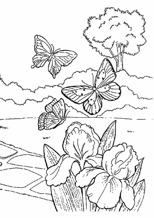 Free Coloring Sheets For Kids For Spring  Spring Coloring Pages Best Coloring Pages For Kids