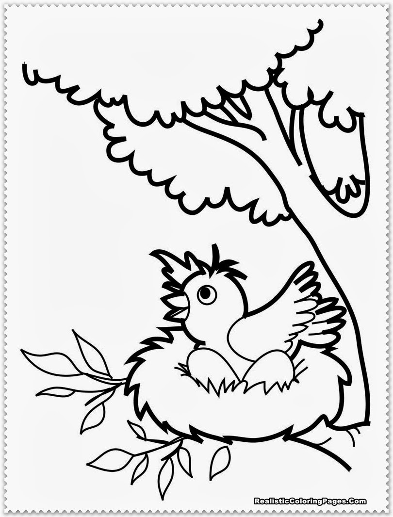 Free Coloring Sheets Of Birds  Bird Coloring Pages Realistic
