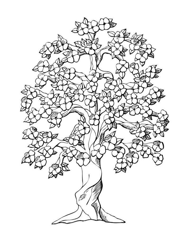 Free Printable Coloring Pages Trees  Free Printable Tree Coloring Pages For Kids