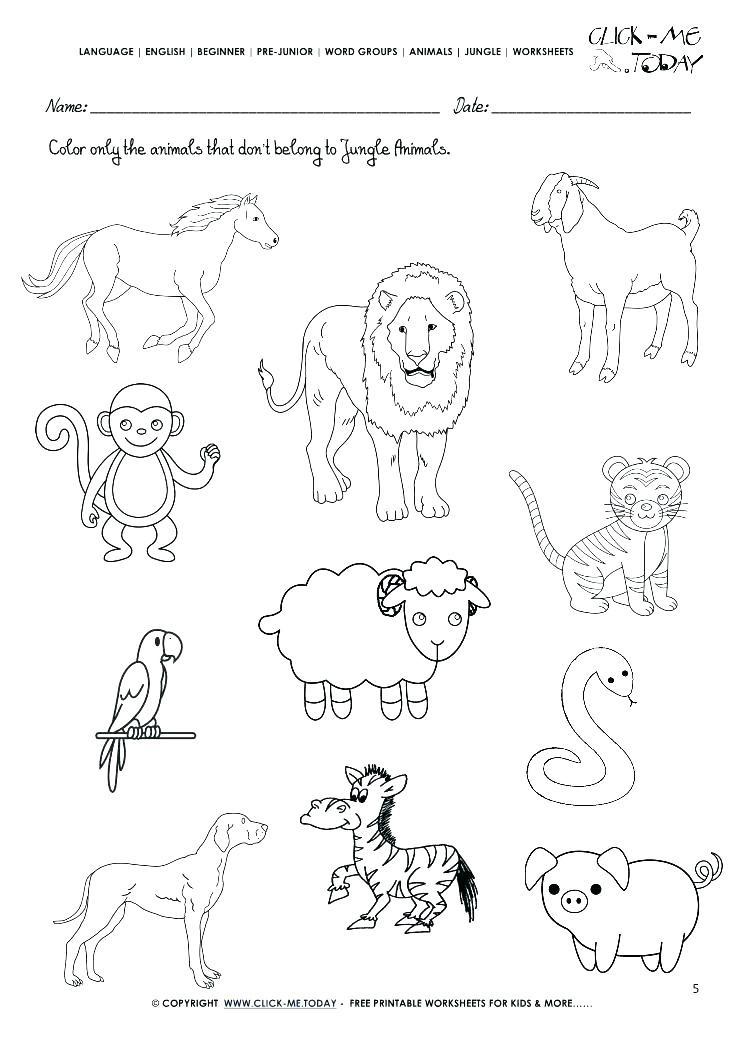 Free Printable Coloring Sheets Of Animals For 5 Grades  animal groups worksheets – albertcoward
