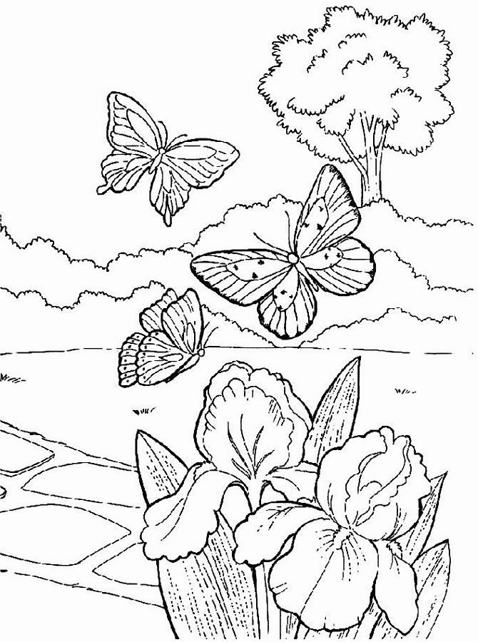 Free Printable Coloring Sheets Spring For Adults  Spring Coloring Pages For Adults Coloring Home