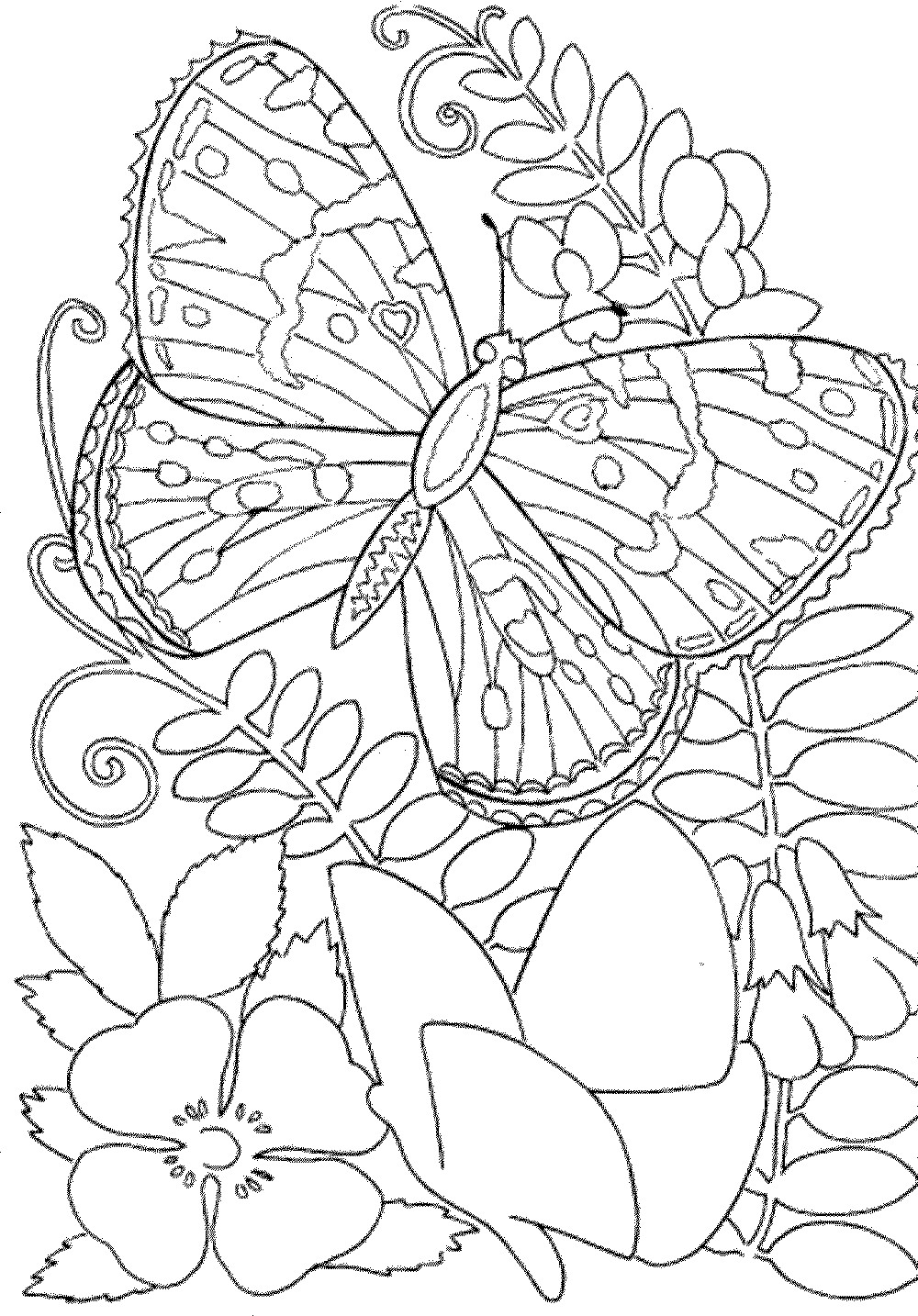 Free Printable Coloring Sheets Spring For Adults  Free Printable Spring Coloring Pages For Adults Coloring
