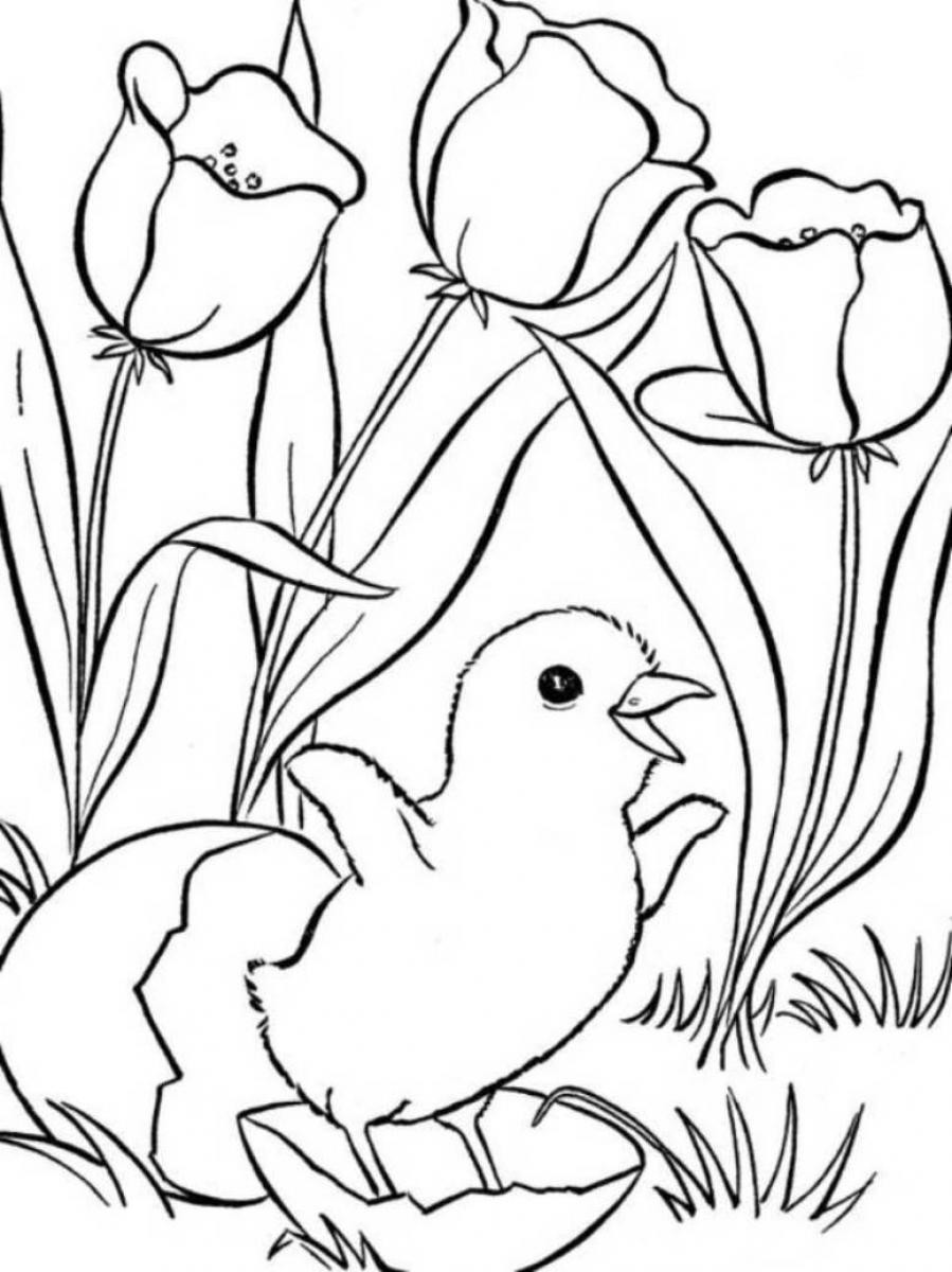 Free Printable Coloring Sheets Spring For Adults  spring coloring pages