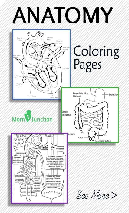 Free Printable Human Anatomy Coloring Pages  FREE Printable Anatomy Coloring Pages