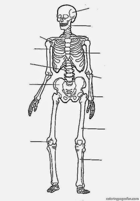 Free Printable Human Anatomy Coloring Pages  Anatomy Coloring Sheets