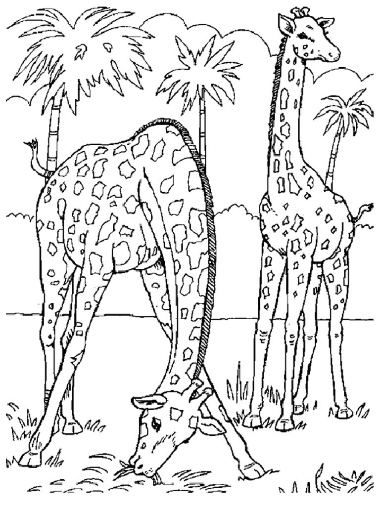 Giraffe Coloring Pages For Kids  Free Printable Giraffe Coloring Pages For Kids