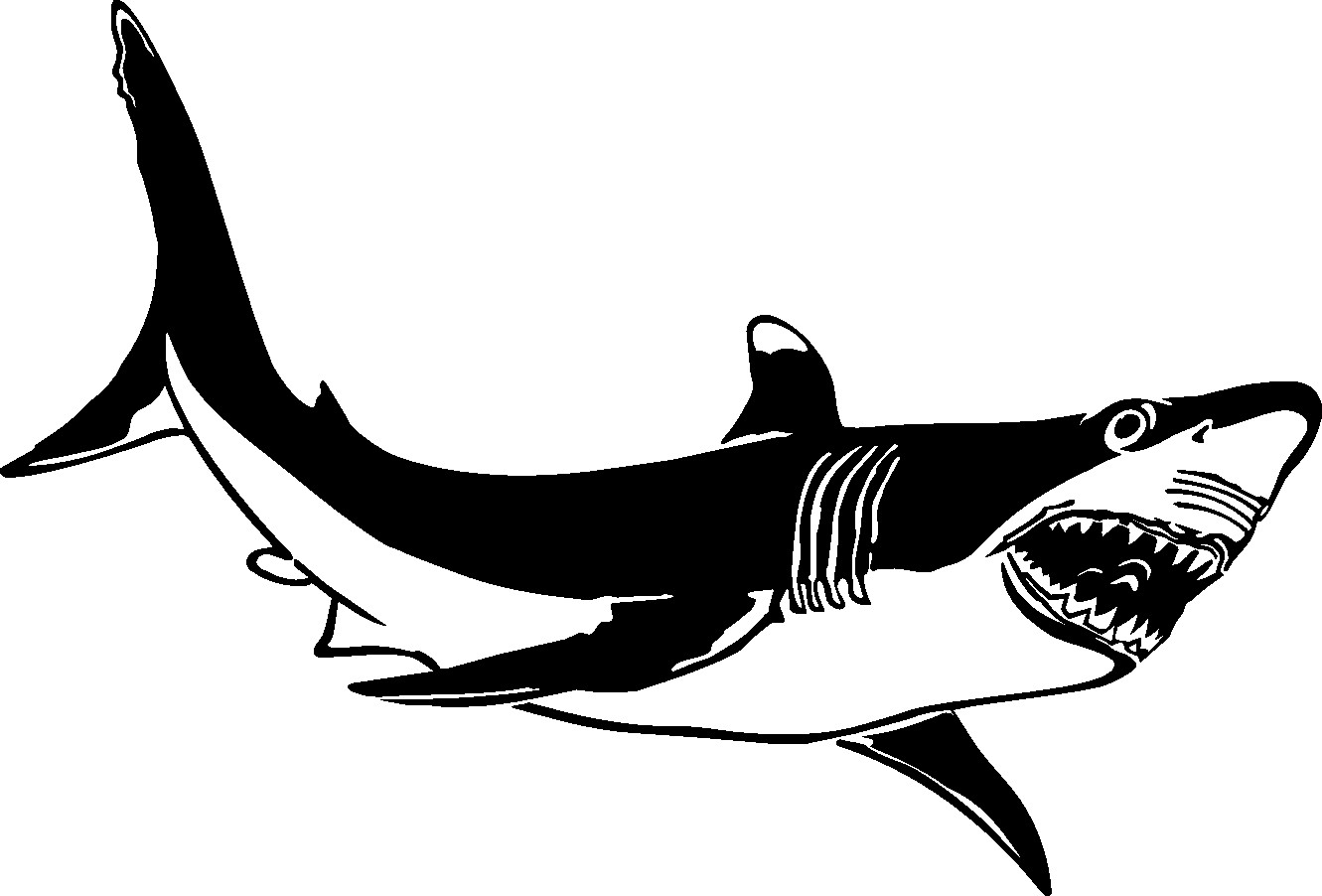Great White Shark Coloring Pages  Great White Shark Coloring Pages