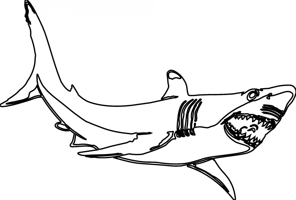 Great White Shark Coloring Pages  Great White Shark Drawing
